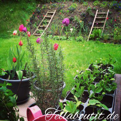 Die Gartensaison ist eröffnet