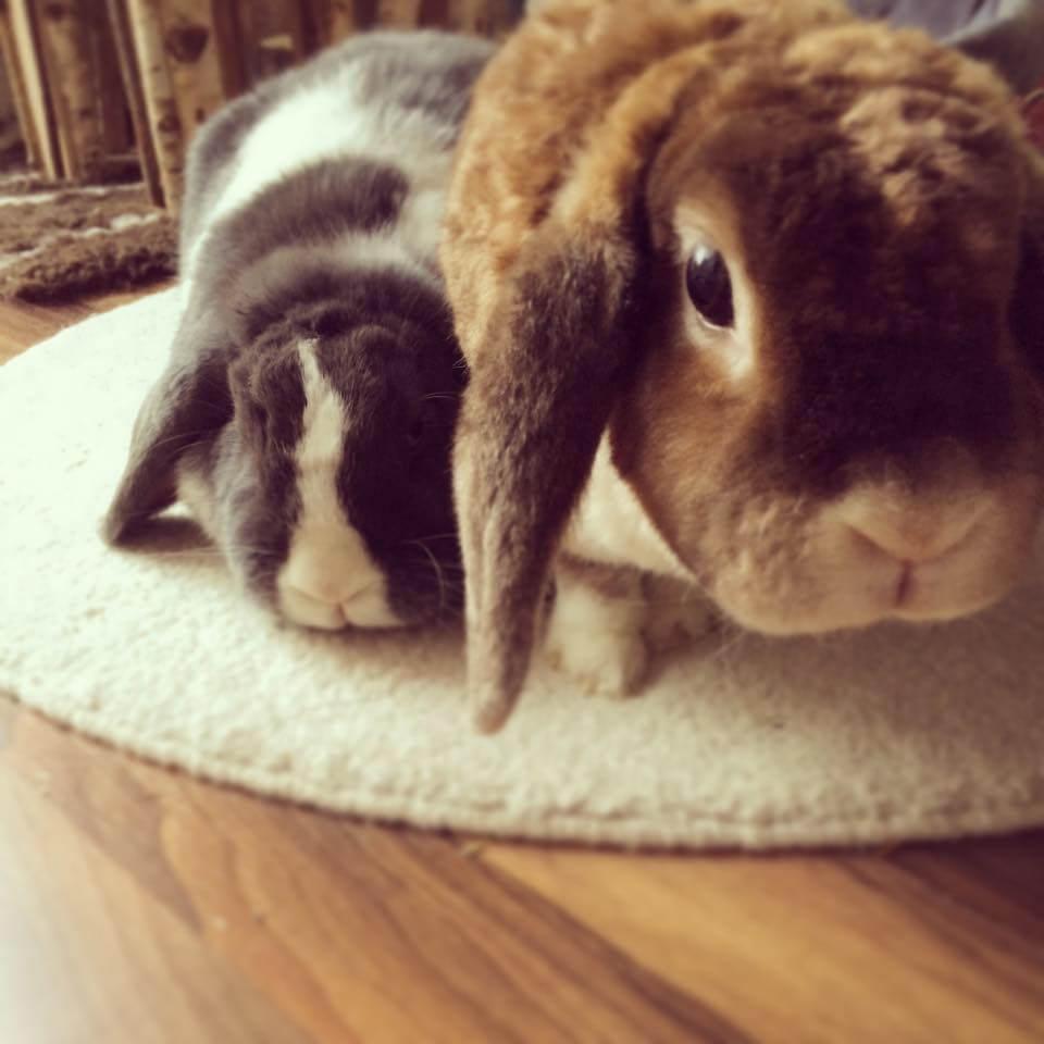 Kaninchenauslauf selber bauen