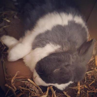 Selbstgebauter Kaninchenauslauf für die Wohnung