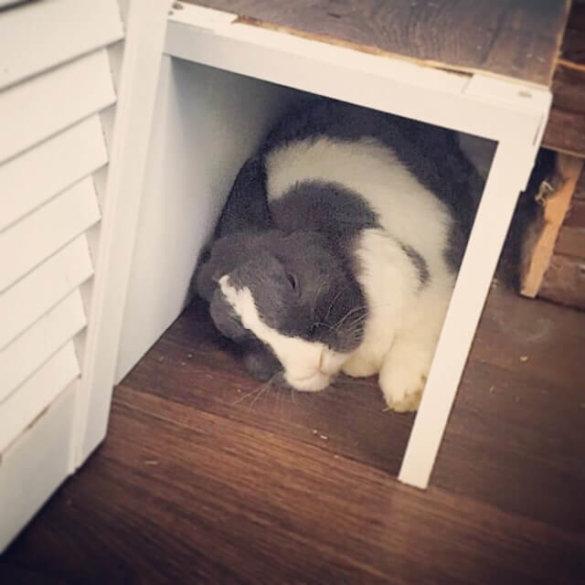 Schlafendes glückliches Kaninchen