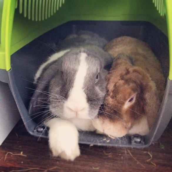 Kuschelige Kaninchen