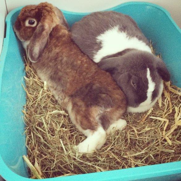 DIY Kaninchenauslauf indoor