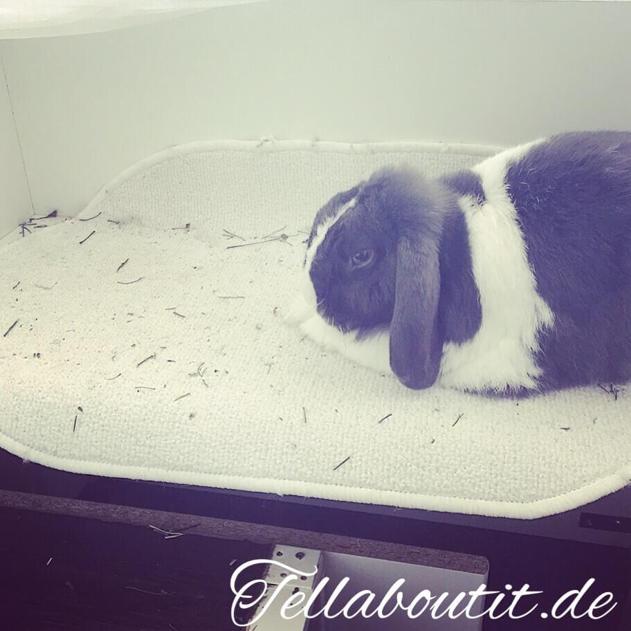 Podest im Kaninchenstall