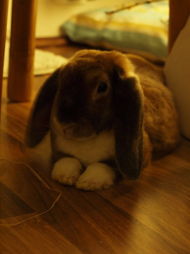 kaninchenstall selber bauen kosten