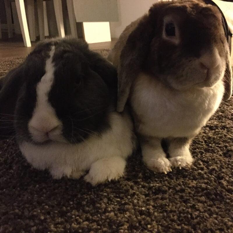Kaninchenstall selber bauen - Die Hauptdarsteller